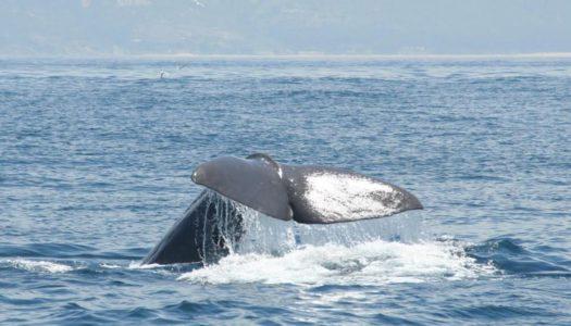 Arranca la temporada de avistamiento de cetáceos