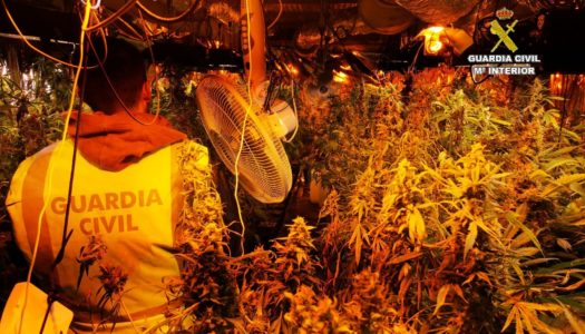 """Desmantelan una plantación """"indoor"""" de marihuana en San Roque"""