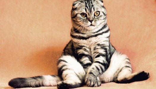 Pon un gato en tu vida