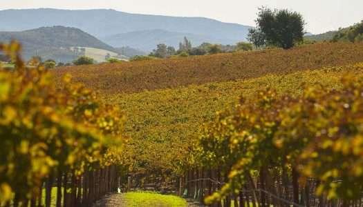 Vinopolis: Compartir un buen vino