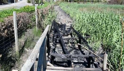 La pasarela de la Laguna de Torreguadiaro, una prioridad